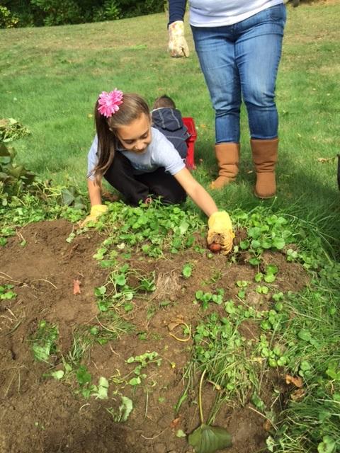 Harvest 19.jpg -